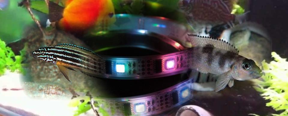 Akwarium i oświetlenie LED
